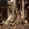 destructive detail (daniel_james) Tags: 2018 canon6d canon1635mm cambodia kambodscha temples angkor taprohm ruins forest trees roots destruction southeastasia khmer