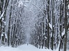 a winter park (VERUSHKA4) Tags: park alley canon europe russia moscow kuskovo vue view ville city cityscape landscape nature winter hiver february season blanc white brown neve neige people man trunk row parque perspective bough branch astoundingimage