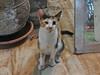 Egyptian cat (danube9999) Tags: cat animals hurghada