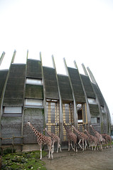 Giraffehouse (Going to the Zoo with Trebaruna) Tags: rotterdam rotterdamzoo diergaarderotterdam diergaardeblijdorp zoo diergaarde netherlands enclosures 2017 22122017