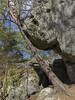 Rochers de Buthiers (Pierre ESTEFFE Photo d'Art) Tags: algue arbre bois branche caillou forêt granit gré loisir nature pierre pin plante promenade roche rocher sable sapin tronc buthiers seinemarne77 france
