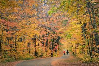 Autumn Yearning