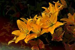 Flowers from Coleton Fishacre (National Trust) (Bobinstow2010) Tags: nationaltrust yellow background kingswear devon arty topaz photoshop