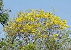 IMG_0004 (mohandep) Tags: events iimb bangalorewildlife nature spiders flowers insects karnataka plants trees