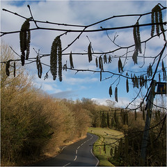 Day 051 Catkins in the sky (Dominic@Caterham) Tags: catkins branches twigs tree road grass sunlight winter clouds