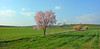 Again spring (cpcmollet) Tags: catalonia catalunya gallecs nature naturaleza flowers flors beauty panorama panoramica campos agriculture field landscape paisaje cielo sky colourful color scenic europe tree rural natura green