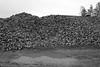 Sugar Beets and Maginot Line (kenner2356) Tags: maginot kodaktmax alsace rhine landscape france kodak5053tmy blackandwhite