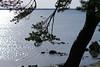 Laulasmaa rand (Jaan Keinaste) Tags: pentax k3 pentaxk3 eesti estonia loodus nature harjumaa laulasmaa meri sea rand beatch puu tree