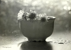 ^°^ (MargoLuc) Tags: daisies lovely little flowers sign spring coming natural window light backlight table shadows cup monochrome bokeh petals glow bw droplets