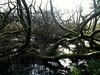 Img_4867 (steven.heywood) Tags: leightonmoss winter