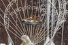 sharing (Dotsy McCurly) Tags: female cardinal male housefinch bird birds nature beautiful eat eating snow snowing yard nj newjersey nikond850 nikonafsnikkor200500mmf56eedvr 7dwf