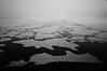 Brunnsviken (IR) (F. Neil S.) Tags: ice floe fractured frozen lake brackish winter sweden scandanavia landscapepark fog hoarfrost blancetnoir monochrome fullspectrumconversion hoya r72 filter sony nex6 emount snow crystals blackandwhite