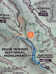 #MuirWoods #NationalMonument 2016 (Σταύρος) Tags: muirwoods nationalmonument nationalpark outofdoors outdoors inthewoods millvalley marin sequoiasempervirens rainyday wet redwoods hiking quality time qualitytime youarehere forest flora fauna trees bushes shurbs leaves windy cold hike climb map