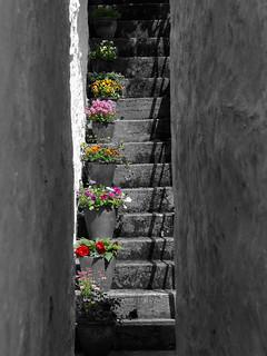 Step by step into to the springtime