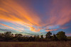 Split Evening Cirrus (thefisch1) Tags: currus sunset color colorful intense horizon tree line pasture sky pink blue