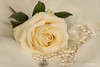 Rose end pearls (Magda Banach) Tags: canon80d colors flora flower macro nature pearls rose
