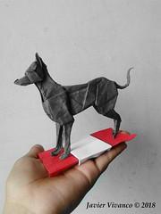 Perro sin pelo peruano - Javier Vivanco (javier vivanco origami) Tags: perro sin pelo peruano javier vivanco origami ica peru