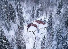 Loodi põrguoru matkarada (BlizzardFoto) Tags: loodipõrgu paistupõrgu loodipõrguorumatkarada loodivalleyhikingtrail koobas cave liivakivi sandstone paljand outcorp viraskioja dronephotography aerialphotography droonifoto aerofoto