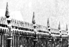 Fence (Karen_Chappell) Tags: fence snow iron bw snowing snowy weather downtown city urban stjohns blackandwhite wroughtiron newfoundland nfld atlanticcanada avalonpeninsula canada winter cold