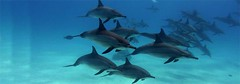 dolphin-house-reef