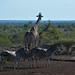 park Kruger South Africa_4854