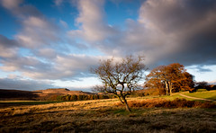 Autumn Evening, Longshaw (Peter Quinn1) Tags: longshawestate derbyshire nationaltrust beech autumn higgertor