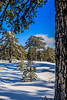 Snow at Troodos (68) (Polis Poliviou) Tags: snow nationalpark troodosmountains cypruscountryside clouds cloudy 2018 countryside freezing cyprus lovenature love naturepictures naturepics forest rural mount mountain mountains pinewood cold frost winter pinetrees pinetree mediterranean forestpark nationalforestpark olympus peak frozen morning environment nature ice snowtrees snowtree sports island cyprustheallyearroundisland cyprusinyourheart yearroundisland zypern republicofcyprus κύπροσ ©polispoliviou2018 polispoliviou polis poliviou πολυσ πολυβιου lovecyprus ski skateboard skiing skiers wood green earth canon