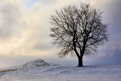cold, lonely and hungry. (andrewmckie) Tags: tree winter snow scottishscenery scenicsnotjustlandscapes scenery edinburgh caltonhill scottish scotland outdoor