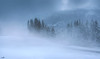 Freezing cold & gusts of wind (VandenBerge Photography) Tags: allgäu gunzesried wind winter season cold forest mountains alps germany snow snowscape nature europe canon ofterschwangerhorn weather bavaria minimalism sundaylights