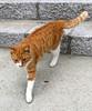"Onomichi-019 (photozaki) Tags: ""dogs cats"" dog dogs inu cat cats neko shikoku japan ohenro88 ohenro pilgrimage"