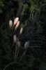 """SDIM5683-sd1- """"Verso sera""""- voigtlander apo-skopar 88mm f8 (ciro.pane) Tags: sigma sd1 merrill foveon ultima luce sera crochi selvatici promontorio punta campanella italia italy italien italie voigtlander skopar apo 88mm colori modulazione contributo sfocato bokeh"""