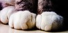 Mittens for Kittens (Anaxit) Tags: cats paws mittens kittens macro