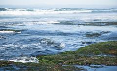 Spot the Lobster Diver (Caryn Sandoval) Tags: california tidepools tidepool nature ocean sea sealife sunset