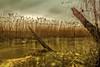 Ratzeburger See - Groß Sarau (Pana53) Tags: photographedbypana53 pana53 naturundlandschaftsfotografie naturfoto reet ratzeburgersee grossarau motiv langzeitbelichtung longexposure lichtstimmung uferzone himmel bewölkt goldfarbig bewuchs see wasser schleswigholstein nikon nikond500 gras baumstamm