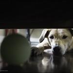 3-52 - the lost ball thumbnail