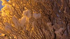 IMG_4375 (Mr Thinktank) Tags: raureif frost