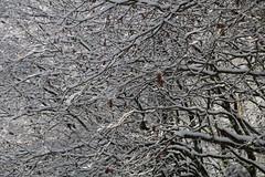 Restos de otoño congelados (5diegoarias) Tags: nieve asturias
