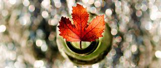 Fall in a bottle