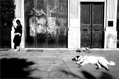 dci_032 (la_imagen) Tags: türkei turkey türkiye turquía istanbul istanbullovers galata dog hund köpek sw bw blackandwhite siyahbeyaz monochrome street streetandsituation sokak streetlife streetphotography strasenfotografieistkeinverbrechen menschen people insan