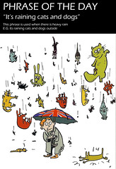 raining cats and dogs..