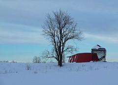 winter etching (LivGreen07) Tags: tree barn winter snow sky silo farm