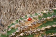 DSC09912 (larrylueck) Tags: domes flora cactus