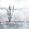 solitary . . . (YvonneRaulston) Tags: tree birds reflection lake water watercolour sky mist atmospheric art australia bokeh creativeartphotography calm colour clouds country canon cold creative dream day desaturated emotive glow moody moments soft photoshopartistry peaceful surreal texture mysterious
