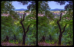 Teufelsmauer outlook 3-D / Stereoscopy / CrossEye / HDR / Raw (Stereotron) Tags: sachsenanhalt saxonyanhalt ostfalen harz mountains gebirge ostfalia hardt hart hercynia harzgau blankenburg teufelsmauer tree woods forest outlook europe germany deutschland crosseye crosseyed crossview xview cross eye pair freeview sidebyside sbs kreuzblick 3d 3dphoto 3dstereo 3rddimension spatial stereo stereo3d stereophoto stereophotography stereoscopic stereoscopy stereotron threedimensional stereoview stereophotomaker stereophotograph 3dpicture 3dglasses 3dimage twin canon eos 550d yongnuo radio transmitter remote control synchron kitlens 1855mm tonemapping hdr hdri raw