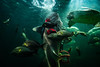* (Sakulchai Sikitikul) Tags: street snap streetphotography songkhla sony a7s voigtlander 28mm thailand aquarium shark fish