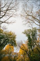 Untitled-3 (Damien DEROUENE) Tags: kodak portra 400iso filmisnotdead trees park nyc