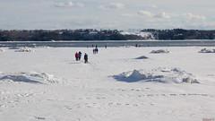 Fleuve Saint-Laurent en hiver, Québec, Canada - 4790 (rivai56) Tags: villedequébec québec canada ca fleuvesaintlaurent glace river hiver winter sony sillery marche sur la du fleuve