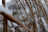 covered (nelesch14) Tags: snow macro cold winter nature reed crystals covered