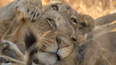 Nairobi-Nationalpark-0369 (ovg2012) Tags: kenia kenya nairobi nairobinationalpark