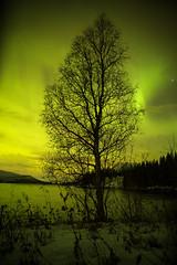 Aurora Tree (Manos Tzavaras) Tags: astroscape astrophotography aurora arctic a7s tree sky landscape lake water